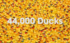 Special Olympics Illinois – Ducky Derby